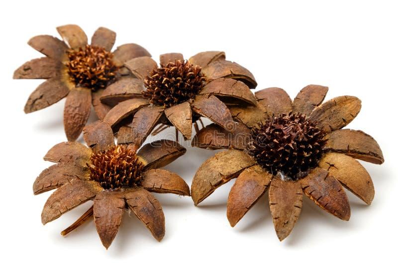 Belles fleurs artificielles d'isolement photographie stock libre de droits