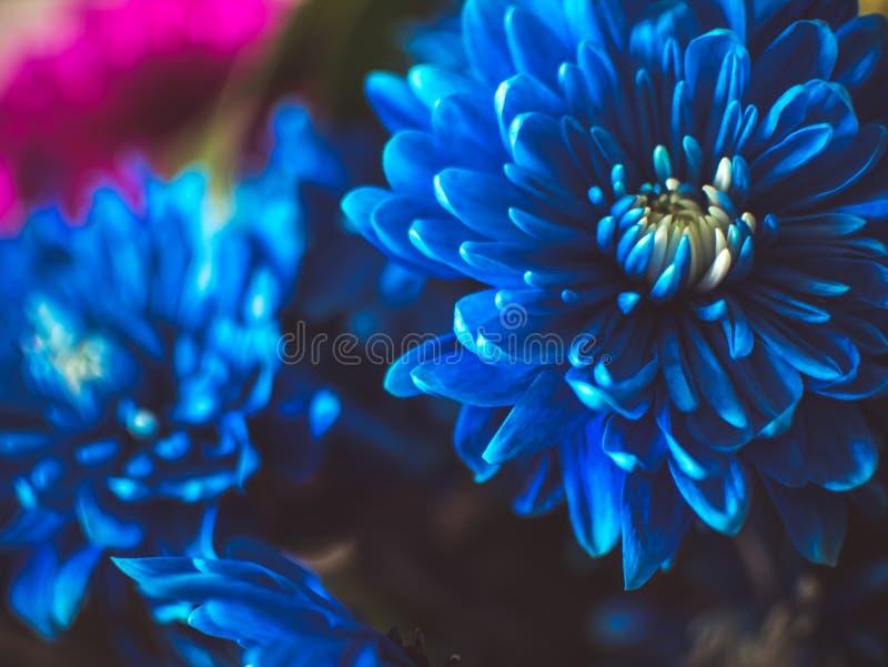Belles fleurs bleues, plan rapproché photos stock