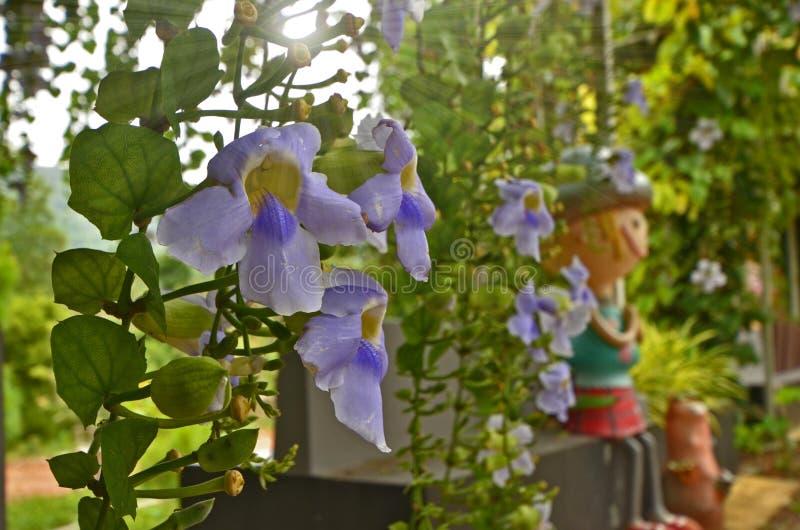 Belles fleurs bleues sauvages accrochantes avec des feuilles image libre de droits