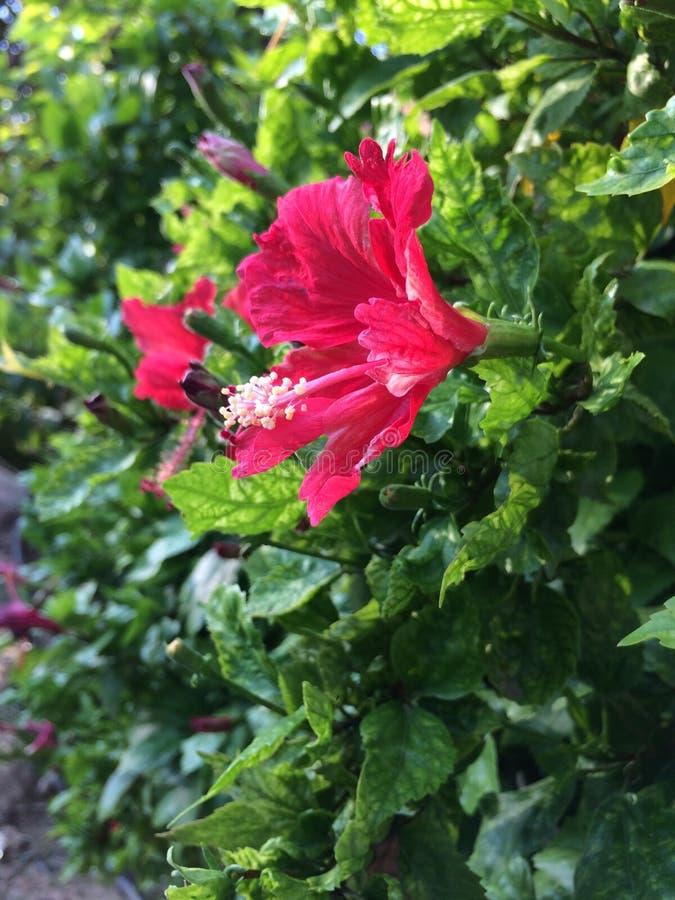 Belles fleurs bleuies de tir d'appareil-photo de foyer photographie stock libre de droits