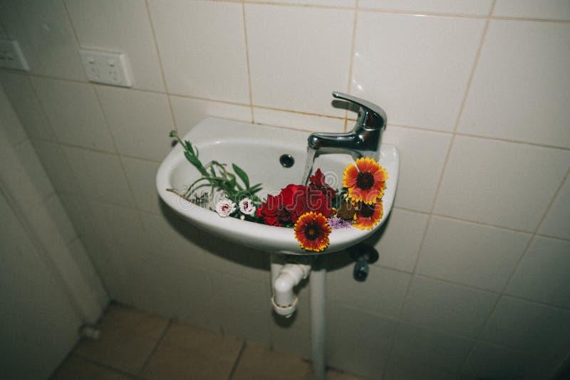 Belles fleurs colorées dans un évier photo stock
