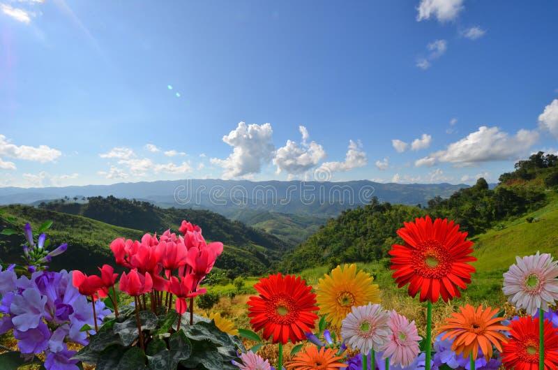 Belles fleurs colorées sur le dessus de montagne avec le ciel bleu photos stock