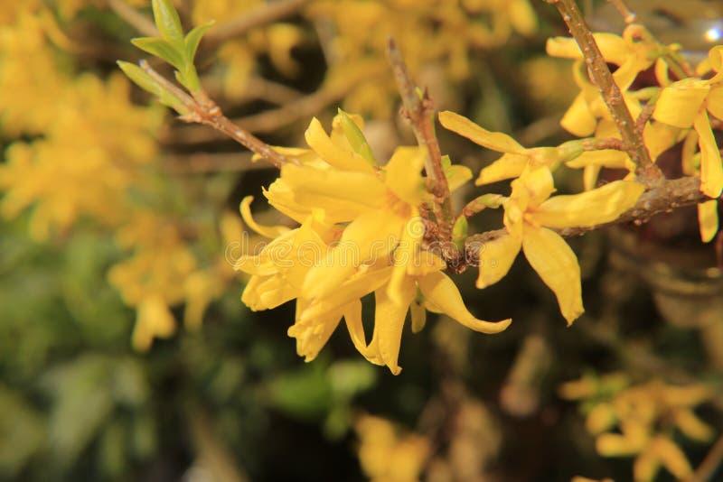 Belles fleurs d'été photos stock