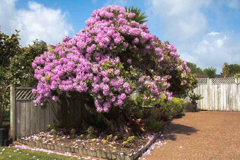 Belles fleurs d'Auckland images libres de droits