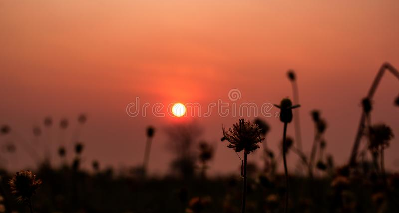 Belles fleurs d'herbe sèche avec le fond de ciel de coucher du soleil dans le paysage de campagne, concept extérieur de nature image stock