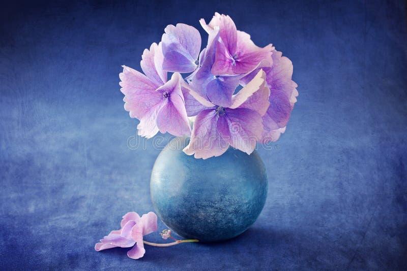 Belles fleurs d'hortensia photos stock