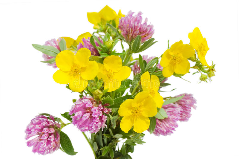 Belles fleurs d'isolement au-dessus du blanc image libre de droits