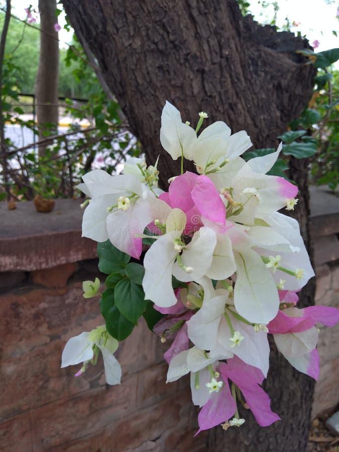 Belles fleurs dans un jardin image stock
