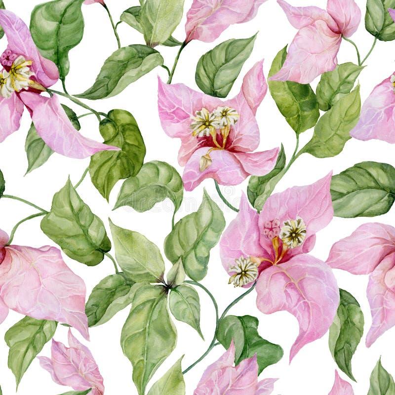Belles fleurs de bouganvillée sur les brindilles s'élevantes sur le fond blanc Configuration florale sans joint Peinture d'aquare illustration de vecteur