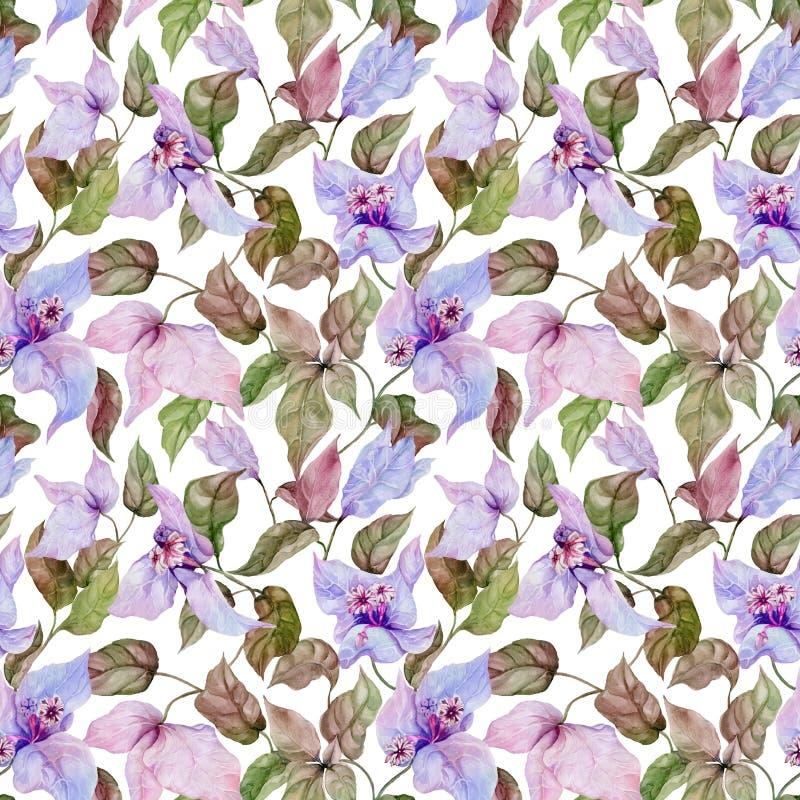 Belles fleurs de bouganvillée sur les brindilles s'élevantes sur le fond blanc Configuration florale sans joint Peinture d'aquare illustration libre de droits