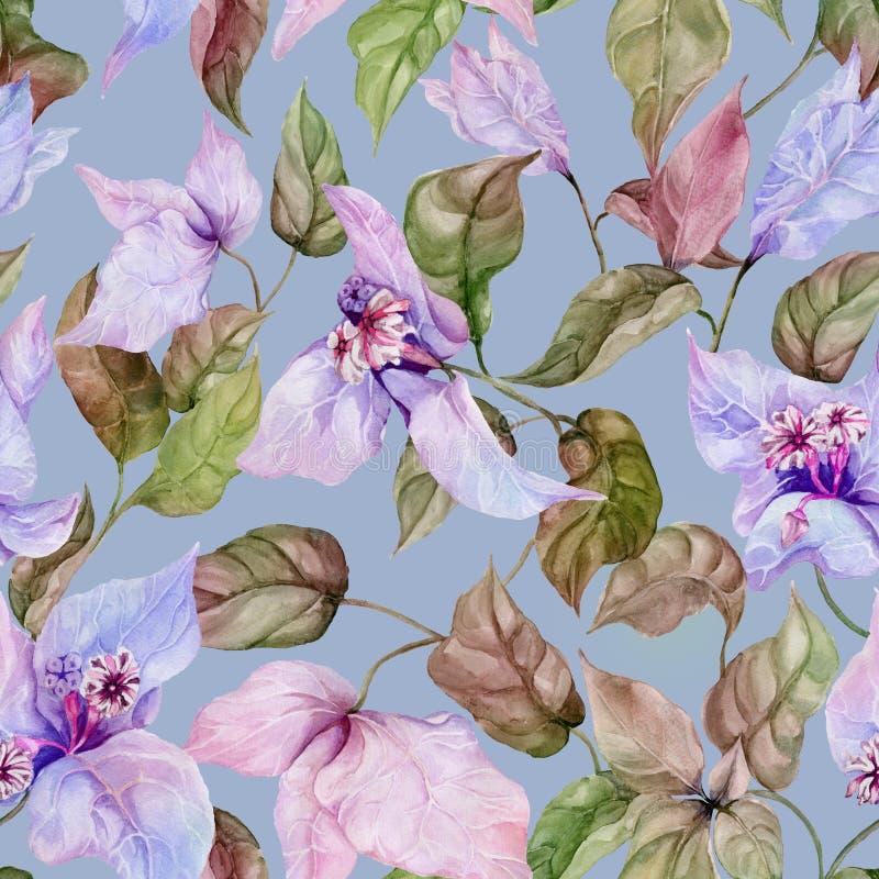 Belles fleurs de bouganvillée sur les brindilles s'élevantes sur le fond bleu Configuration florale sans joint Peinture d'aquarel illustration stock