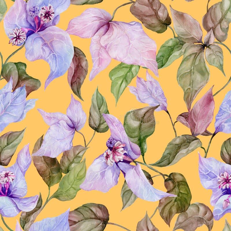Belles fleurs de bouganvillée sur les brindilles s'élevantes sur le fond jaune Configuration florale sans joint Peinture d'aquare illustration stock