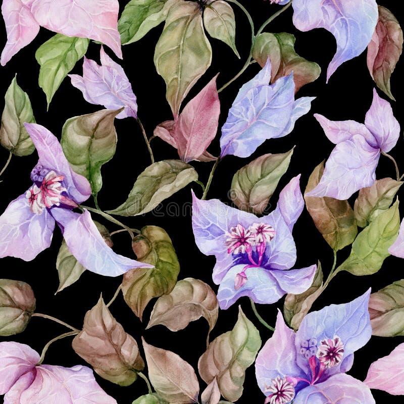 Belles fleurs de bouganvillée sur les brindilles s'élevantes sur le fond noir Configuration florale sans joint Peinture d'aquarel illustration libre de droits