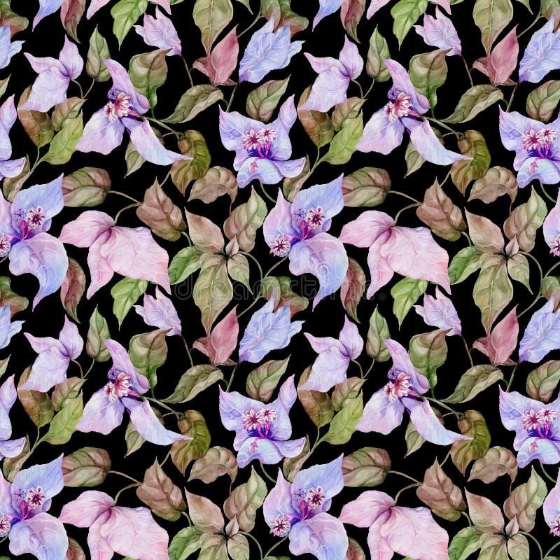 Belles fleurs de bouganvillée sur les brindilles s'élevantes sur le fond noir Configuration florale sans joint Peinture d'aquarel illustration de vecteur