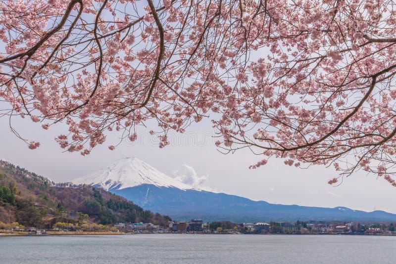 Belles fleurs de cerisier au printemps avec le mont Fuji photos stock
