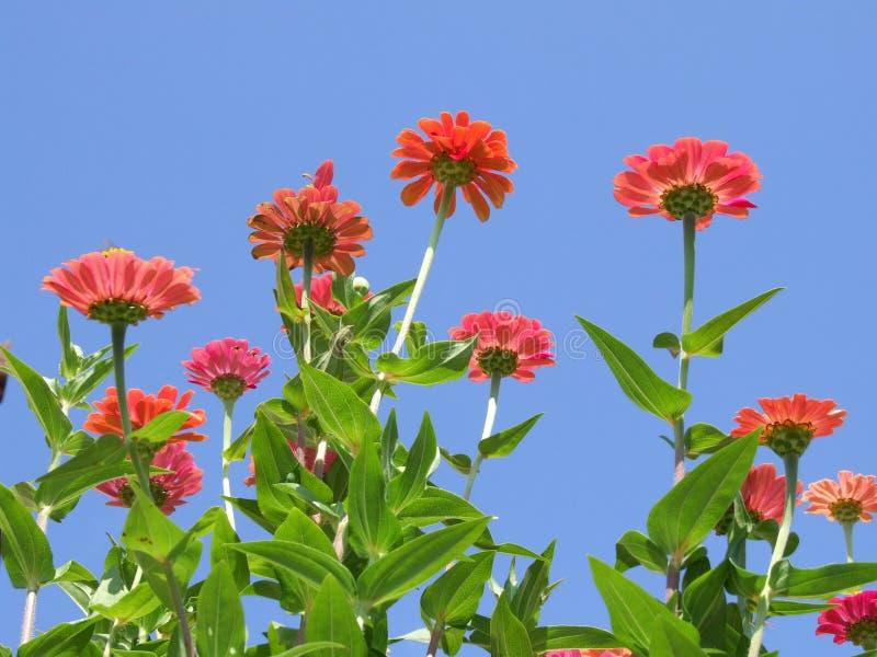 Belles fleurs de jardin images stock