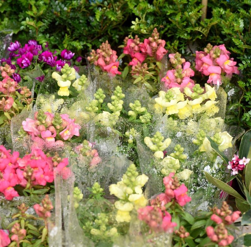 Belles fleurs de ressort dans dimanche photo libre de droits