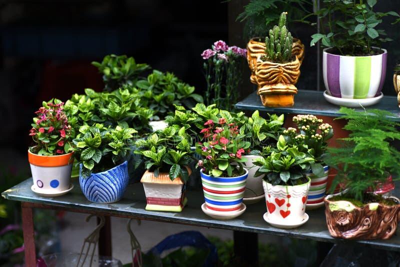 Belles fleurs de ressort dans dimanche photographie stock libre de droits