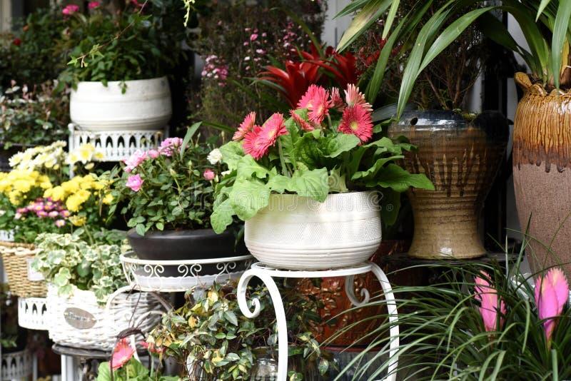 Belles fleurs de ressort dans le pot de fleurs photo stock