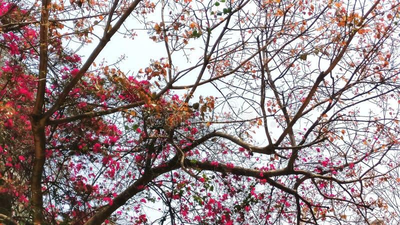 Belles fleurs de ressort en nature photographie stock libre de droits