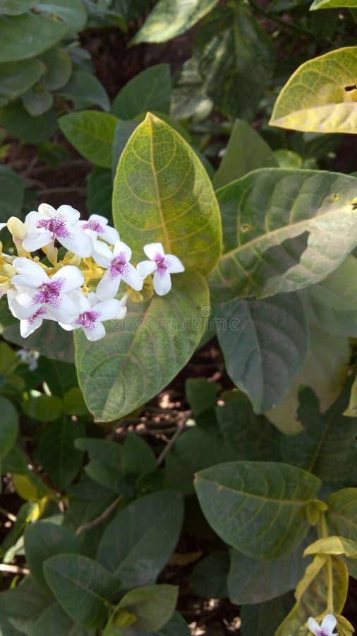 Belles fleurs de Smoll images stock