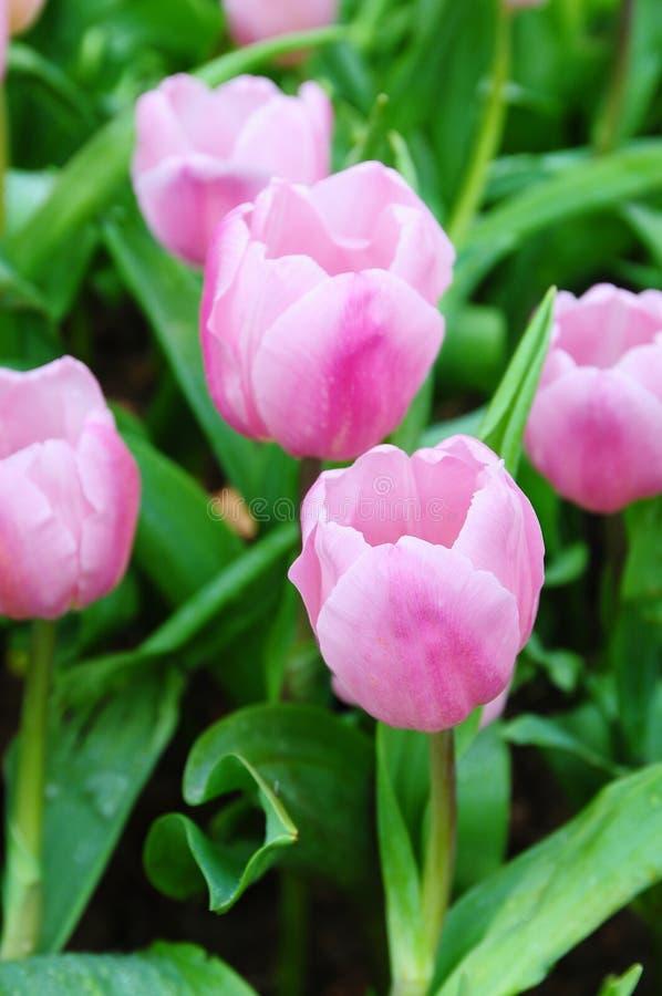 Belles fleurs de source. photographie stock libre de droits