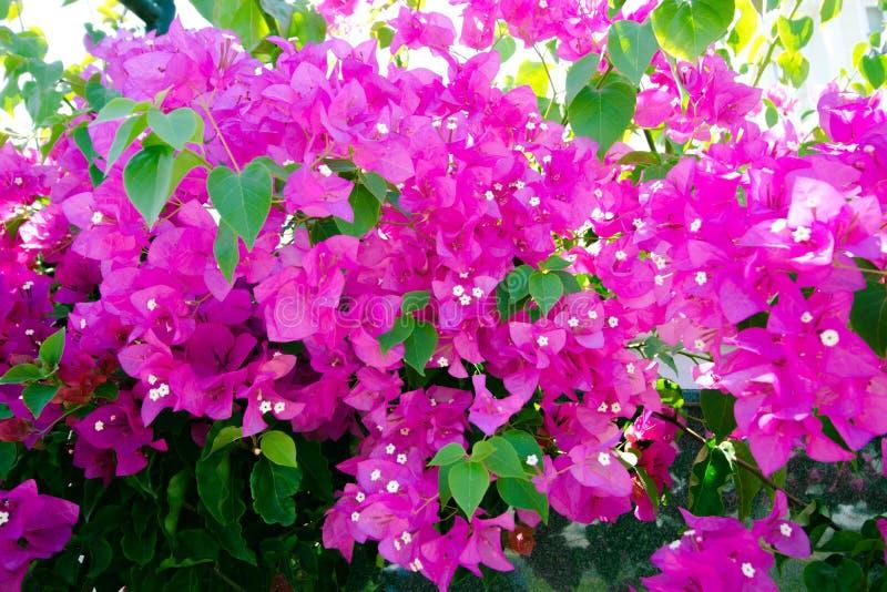 Belles fleurs de tonalité pourpre photographie stock libre de droits