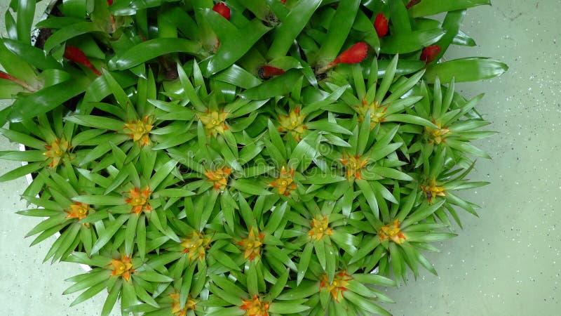 Belles fleurs des Pays-Bas au printemps image stock
