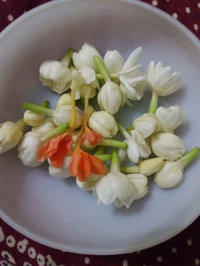 Belles fleurs du jasmin s Je vous aime photographie stock