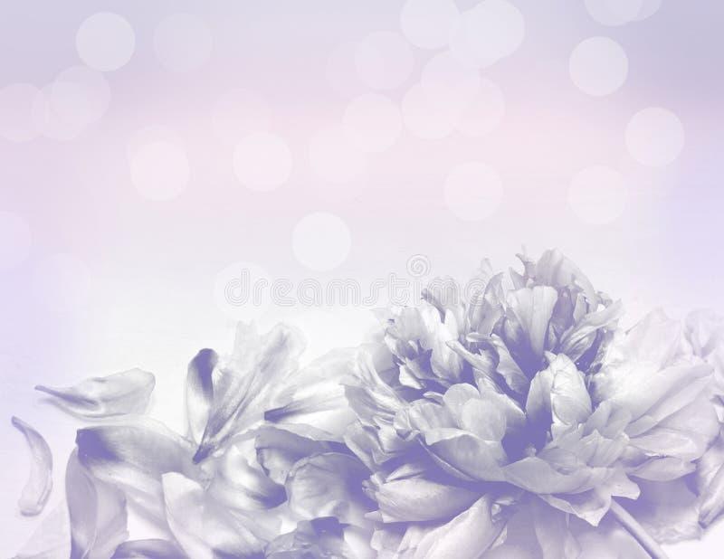 Belles fleurs faites avec des filtres de couleur - fond d'Abstrack image libre de droits