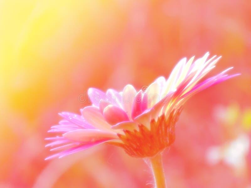 Belles fleurs faites avec le fond de filtres de couleur photos stock