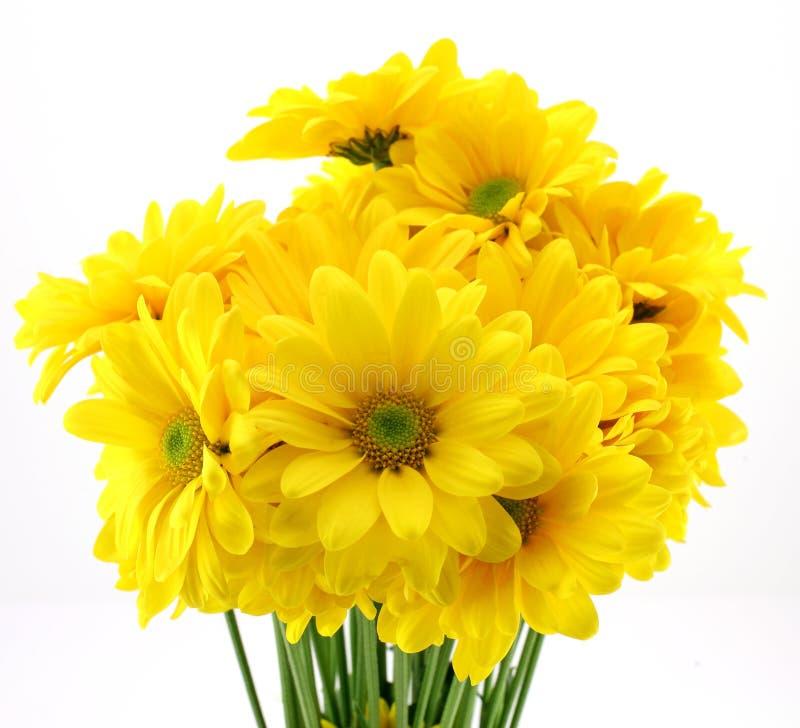 Download Belles fleurs jaunes image stock. Image du toujours, sensible - 2149739