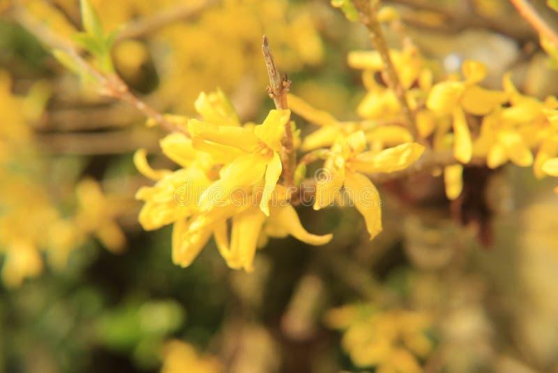 Belles fleurs jaunes images stock