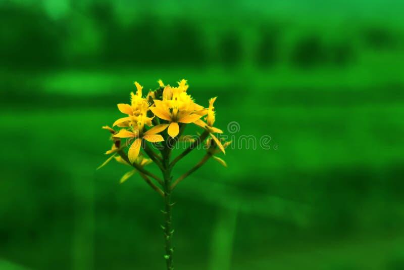belles fleurs jaunes en vert naturel images stock