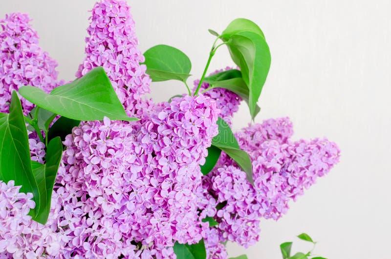 Belles fleurs lilas photos libres de droits