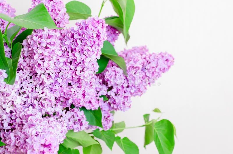 Belles fleurs lilas photo libre de droits