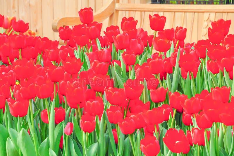 Belles fleurs naturelles photos libres de droits