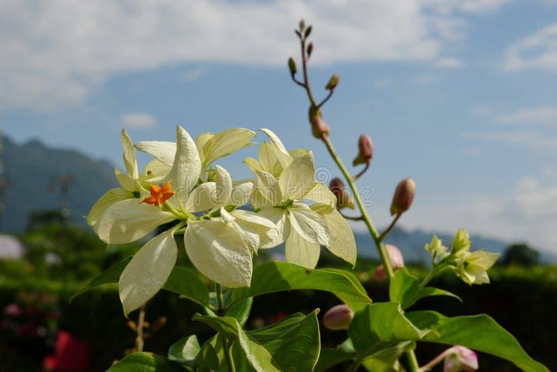 Belles fleurs que la nature crée photographie stock
