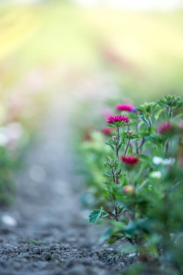 Belles fleurs, recueillies sur un champ photos stock