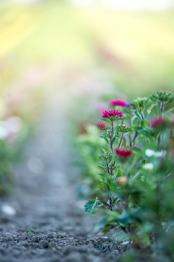 Belles fleurs, recueillies sur un champ photo libre de droits