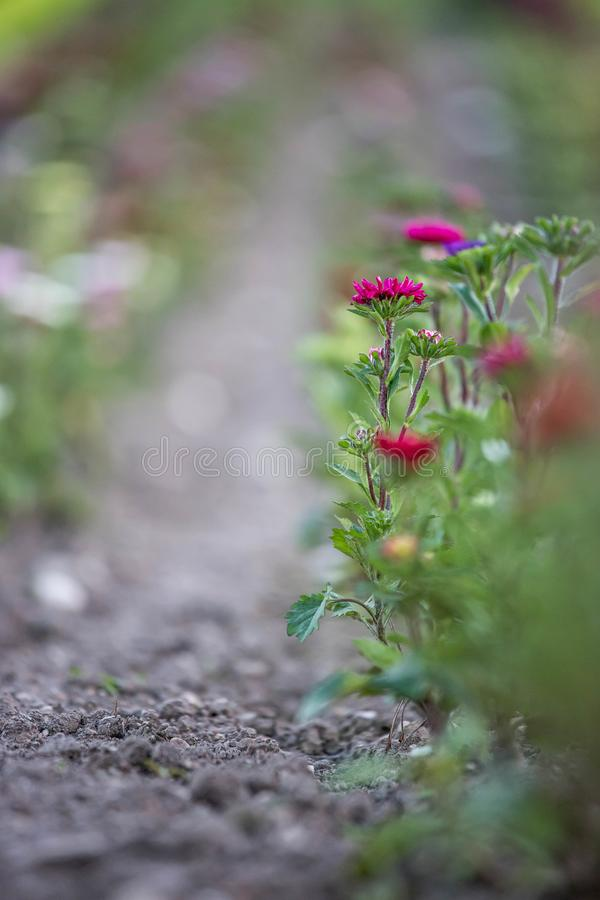 Belles fleurs, recueillies sur un champ image libre de droits