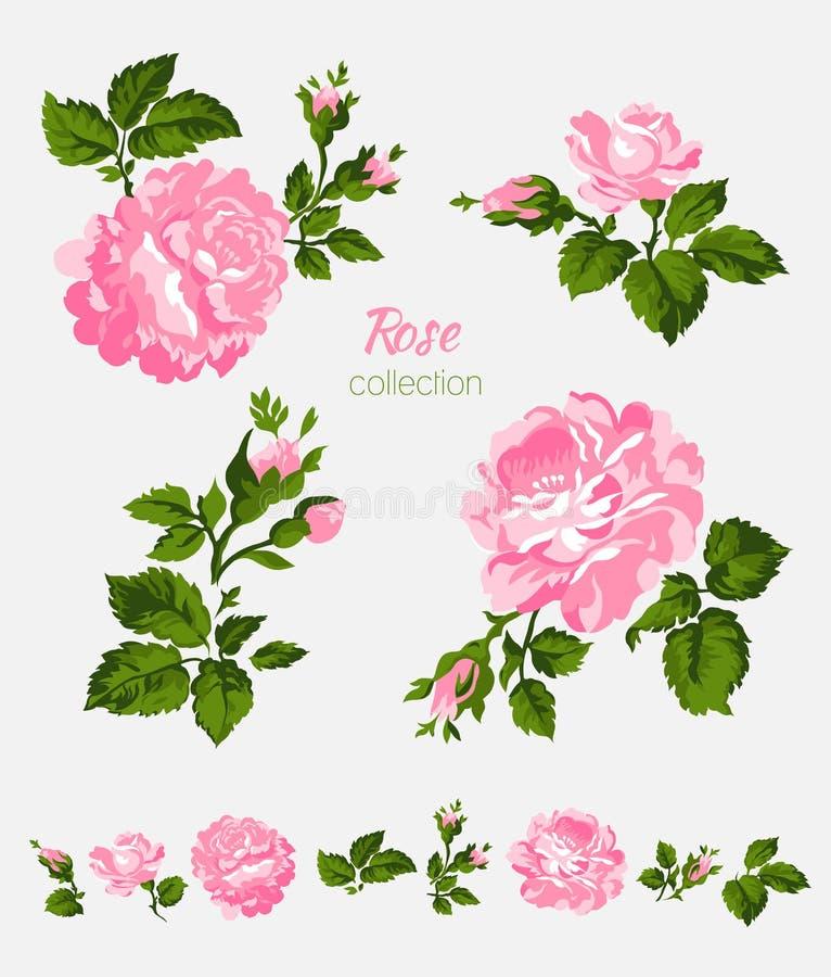 Belles fleurs roses d'isolement sur le fond blanc Ensemble de différents éléments de conception florale illustration libre de droits