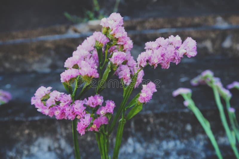 Belles fleurs roses pendant l'été photographie stock