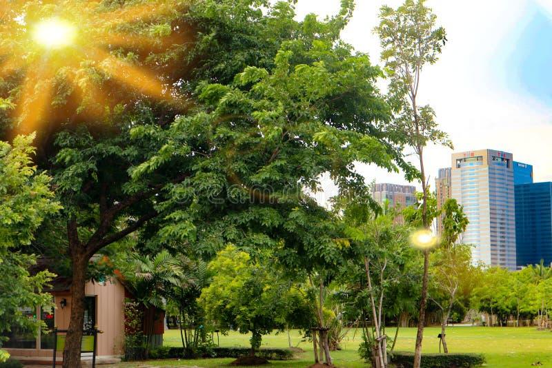 Belles fleurs rouges et roses colorées et forêt verte d'arbre d'usine de nature dans le jardin public et parcs verts de ville photos stock
