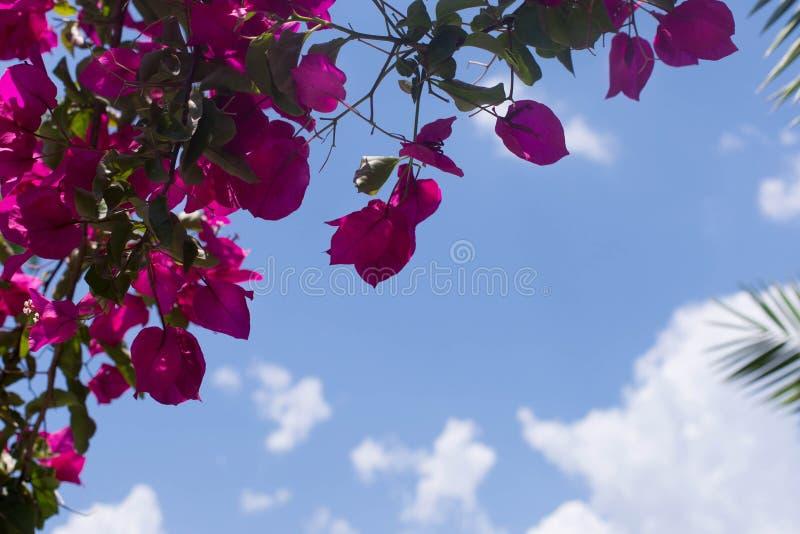 Belles fleurs rouges sur le fond du ciel bleu photo libre de droits
