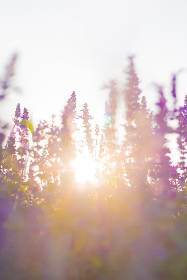 Belles fleurs sur le fond de coucher du soleil photographie stock libre de droits