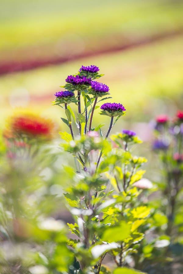 Belles fleurs sur un champ, ressort image libre de droits