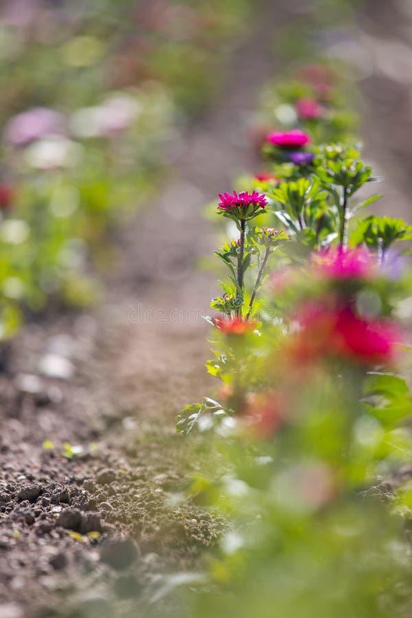 Belles fleurs sur un champ, ressort photographie stock libre de droits