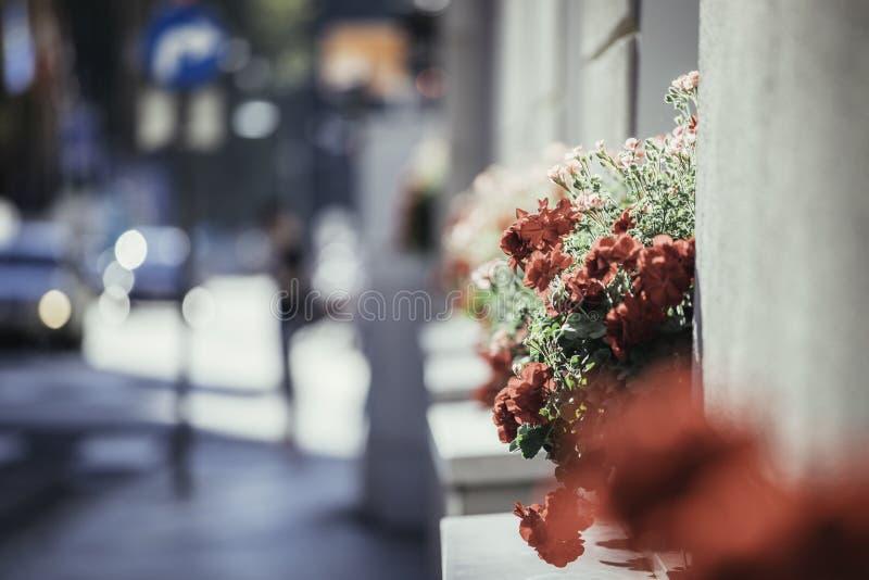 Belles fleurs sur une avenue de achat, heure d'?t? photos stock