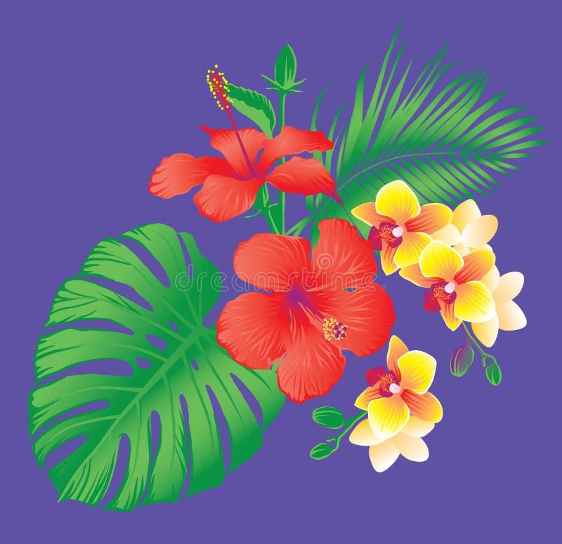 Belles fleurs tropicales de ketmie et d'orchidée illustration stock